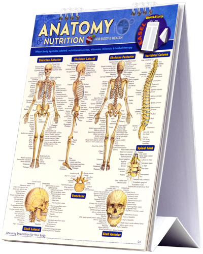 Image For Anatomy & Nutrition Easel