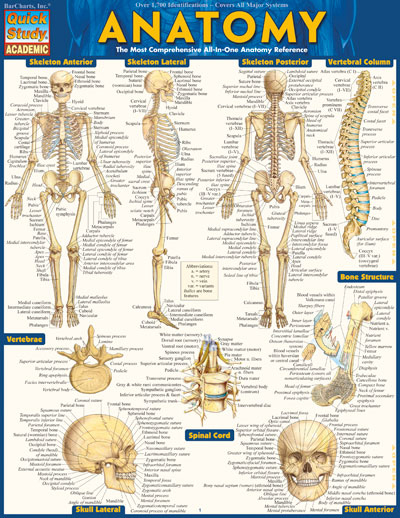 Image For Anatomy Quickstudy