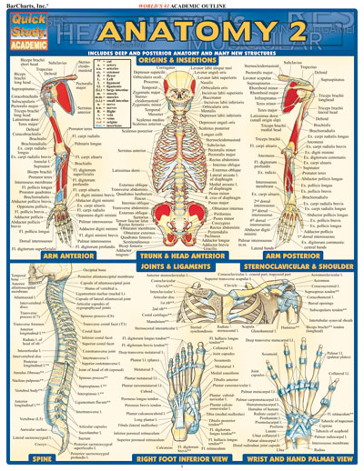 Image For Anatomy 2 Quickstudy