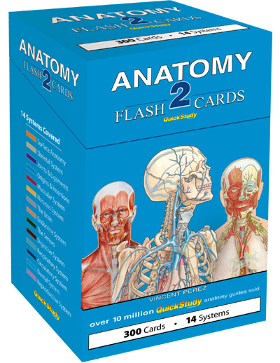 Image For Anatomy Flash Cards 2