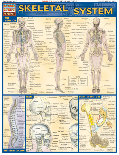 Image For Skeletal System Quickstudy