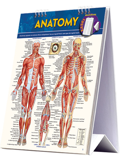 Image For Anatomy Easel
